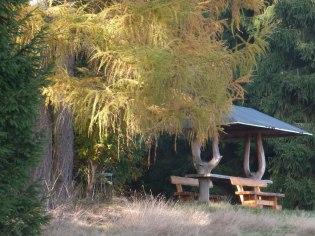 Herbstwald 8