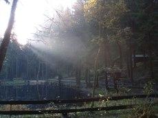 Novemberwald am Meiselteich 2