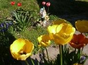 Tulpen 48