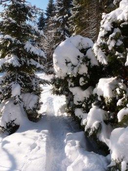 Klingenthal – Schneelandschaften 11