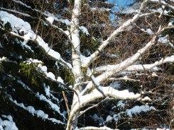 Klingenthal – Schneelandschaften 19