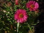2014_09_28_Herbstblumen_1