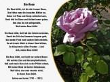 Die Rose – Achim von Arnim