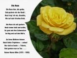 Die Rose – Rainer Maria Rilke