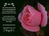 Rose – Johann Jakob Ihle