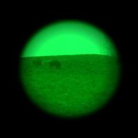 Nocne polowanie na dziki i noktowizor Armasight Avenger