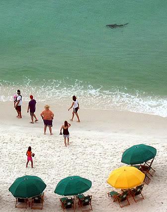 Bull shark spottet ud for Floridas kyst søndag...