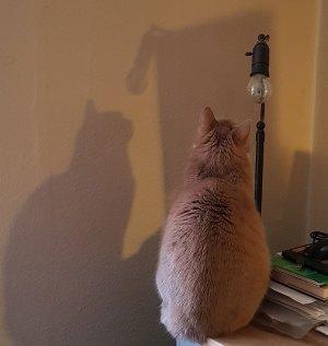 Klassisk kattebillede: Kat som stirrer på en væg