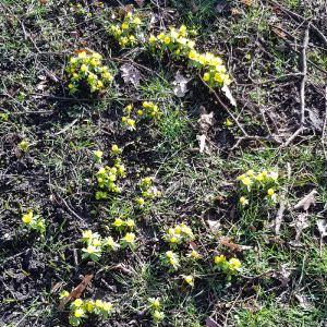 Blomster i fuld flor i Rådhusparken i Aarhus den 15.feb 2019