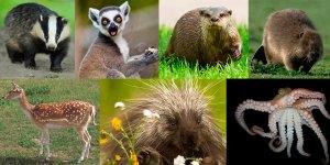Vinterferiens dissektioner 2017 - grævling - lemur - odder - bæver - dådyr - hulepindsvin - blæksprutte