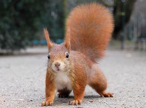 egern - modelbillede