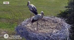 20.juli: Den første stork er lettet fra reden