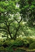 england2013-wistmanswood-3483