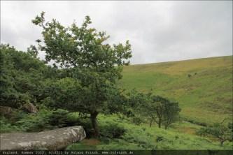 england2013-wistmanswood-3537