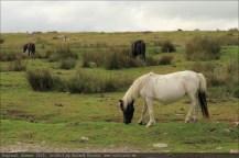 england2013-merrivale2-5032