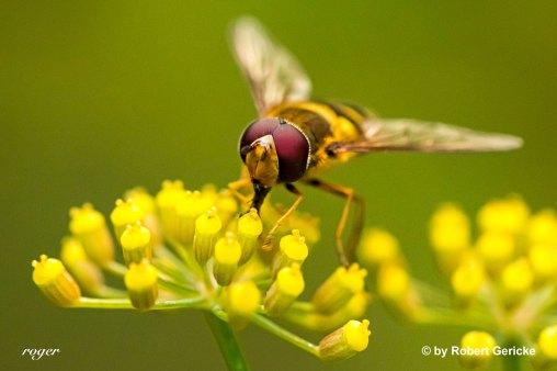 Insekt