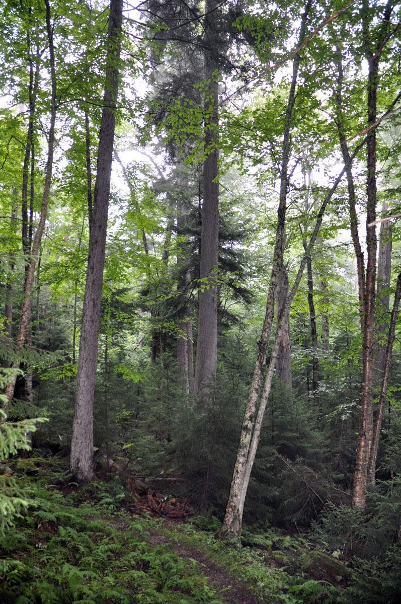 Gaudineer trail