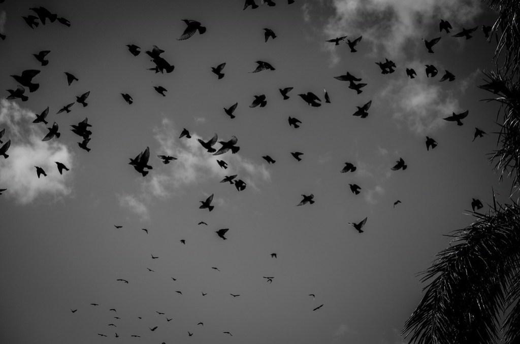 Picture of Birds in Flight