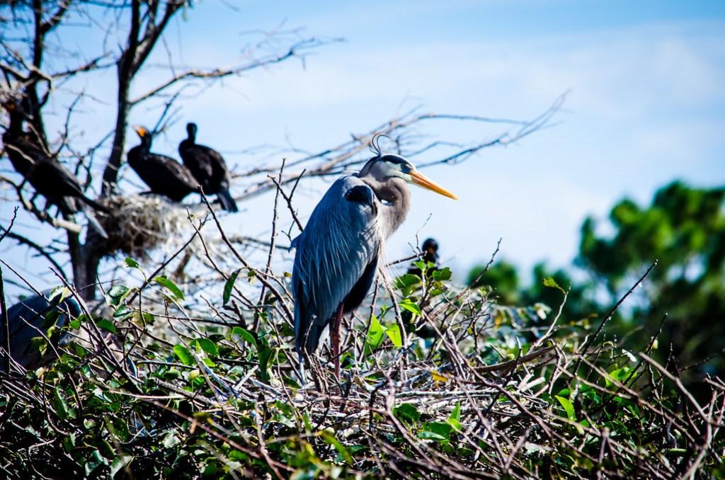 Bird on guard
