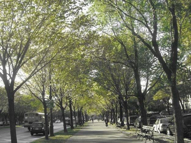 Cathedral Ave, Brooklyn.jpg