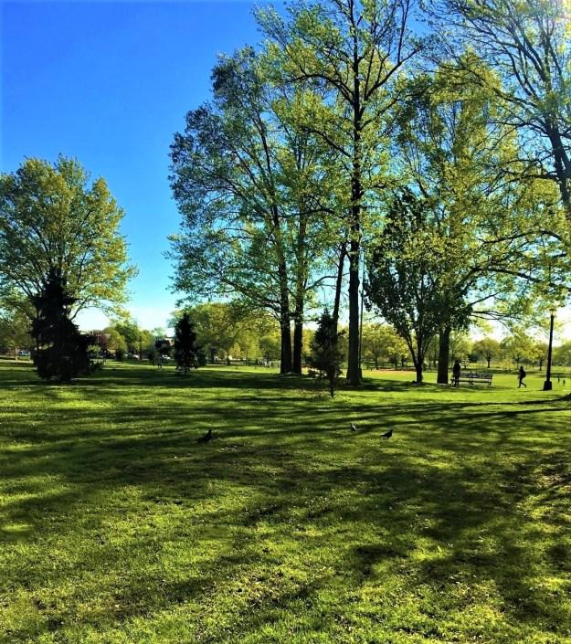 springtime - Juniper Valley Park, May 2017.jpg