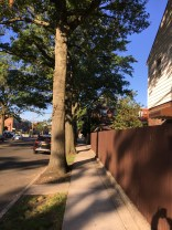 Eliot Avenue, Middle Village, Queens, New York