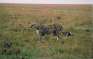 Kenya31