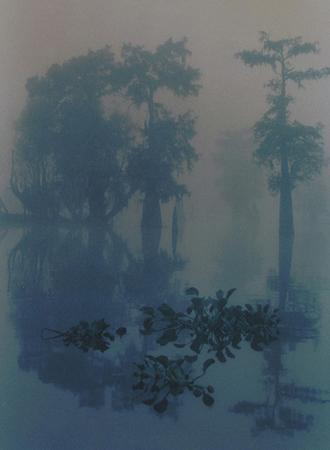 Fog,-Henderson-Swamp