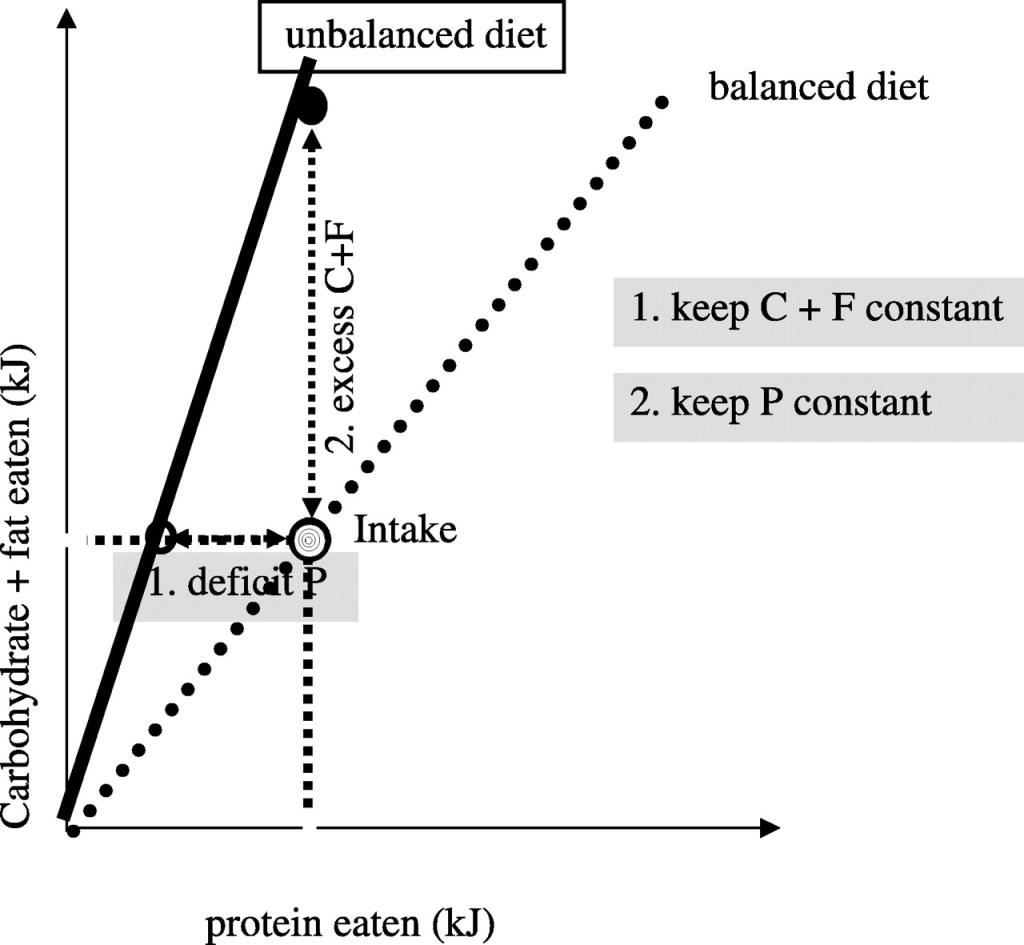 Diet plans webmd