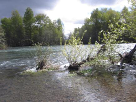 Rogue River flowing at a fast pace. 5000 CFS on the river today.