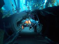 Dubai Aquarium and underwater zoo is a huge aquarium in the Dubai Mall, and a highlight for Roguetrippers 48 hour trip.