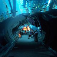 Dubai Aquarium and underwater zoo is a huge aquarium in the Dubai Mall, and a highlight for Roguetrippers 48 hour trip.