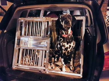 RandomsTravels travels in comfort and safety on her road trips, with this custom made car crate that is safety & comfort tested for pet friendly Roadtrips.