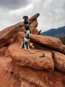 Random & Hazzard the Dalmatians of RandomsTravels, love to hike the mountains and Canyons.