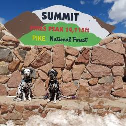The Dalmatians of RandomsTravels really get around, and a road trip to the mountains is just another travel bucket list item checked off.