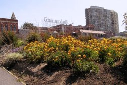 Ghirardelli Square is a great place to visit during your short stay in San Francisco.