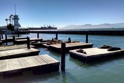 Pier 39 sea lions on the docks at Fisherman's Wharf.