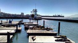 Fisherman's Wharf Pier 39 sea lions.