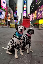 Random and Hazzard of Randoms Travels visit New York City and Times Square