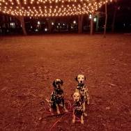 Dalmatians-Commons-Halloween-lights-Roguetrippers