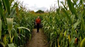 Roguetrippers did the Corn Maze at McCullys Hill Farm