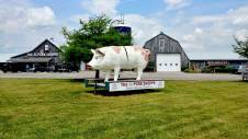 The giant pig is a great roadside attraction in Perth County