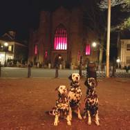 salem-common-witch-museum-dalmatians