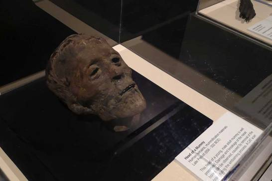 Head-Of-Mummy-Museum-of-Natural-History