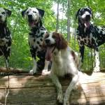 the Dogs of Bedlam Acres go on Hiking adventures