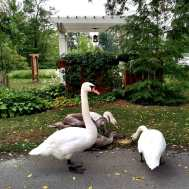 Swans-Forest-Motel-visit-Perth-County