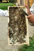 inspecting-Beehives-Huckleberry-hives-visit-perth-county