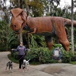 Bedlam Acres Dalmatians visit Dinosaur world on a Day trip from Orlando