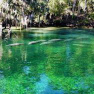Day Trips from Orlando can include Blue Springs State park and manatee viewing