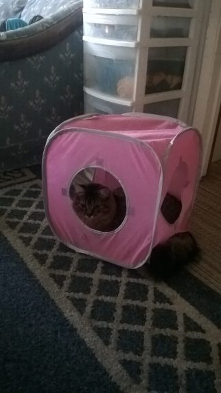 Rory loves his cube, he even has a new mysterious hole to stick his legs and tail through on it. It appeared once we were home.